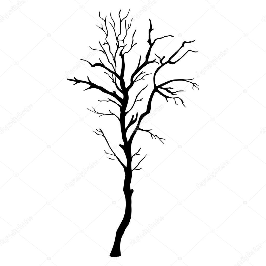 Vector Single Bare Tree Silhouette