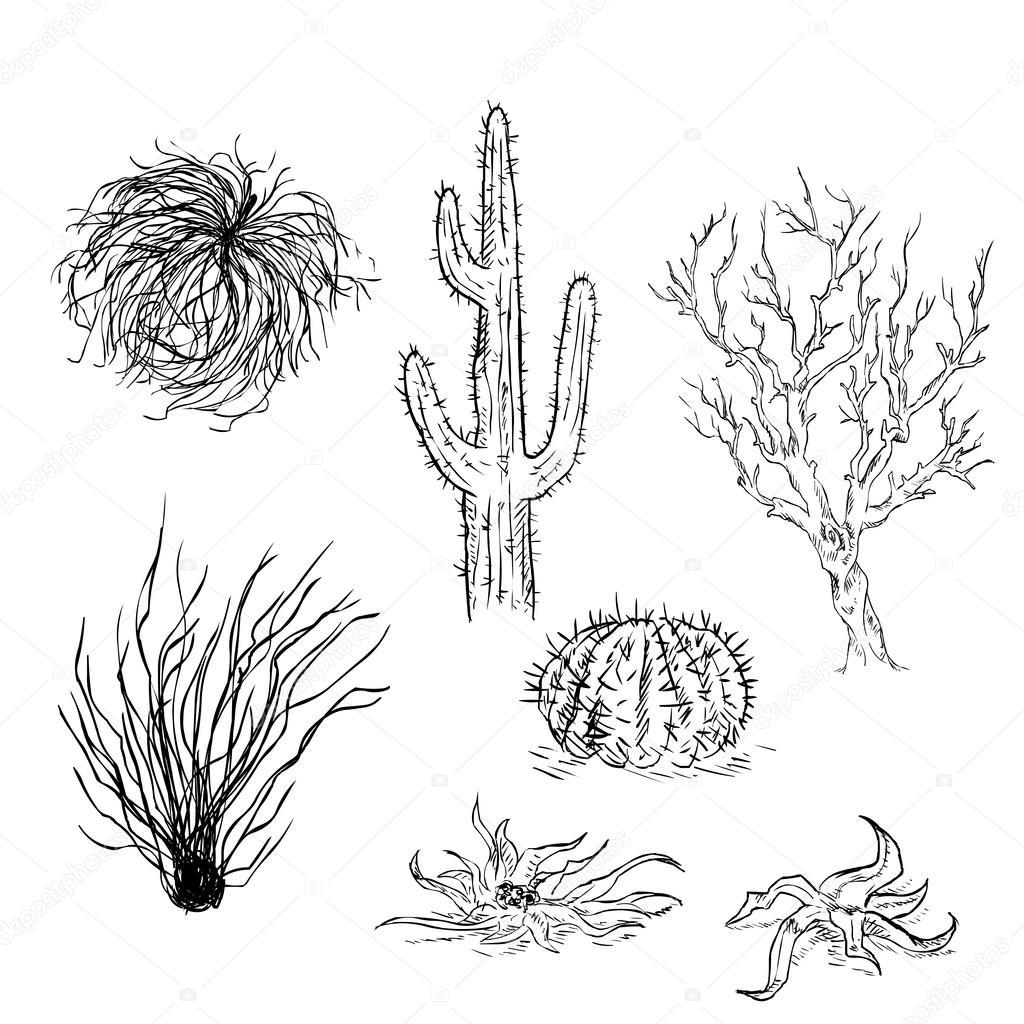 Aantal Schets Cactussen En Woestijn Planten