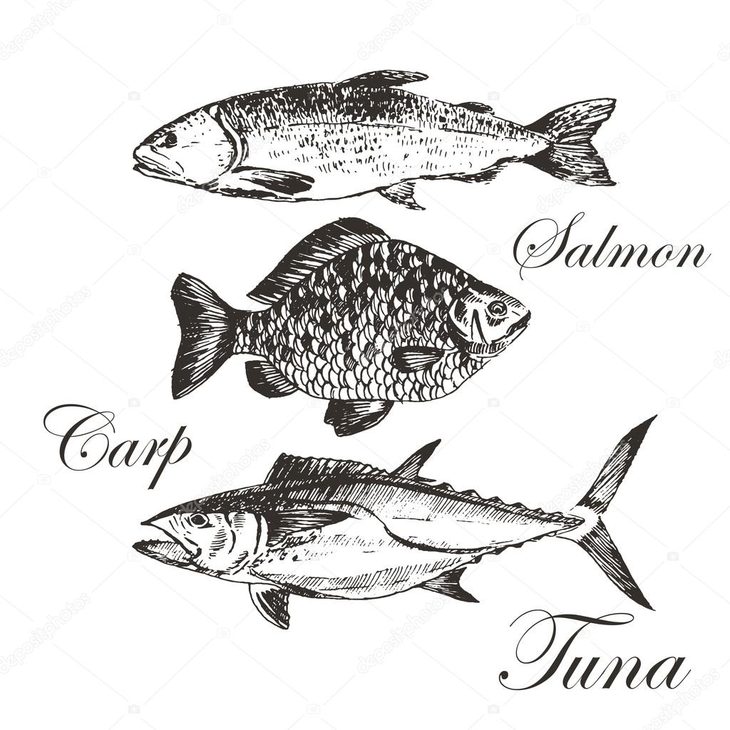 Seafood Clipart