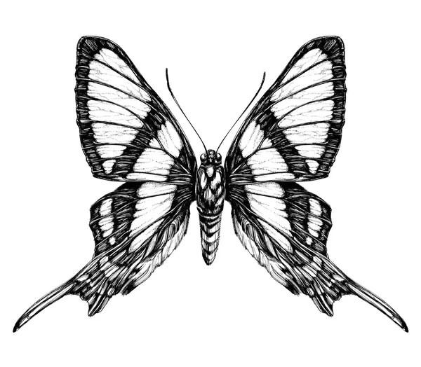 一只蝴蝶的詳細寫實素描 — 圖庫矢量圖像© Diana_Pryadieva #67090557