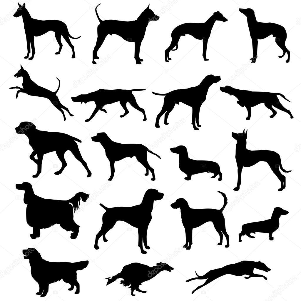 Satz Von Silhouetten Jagdhunde