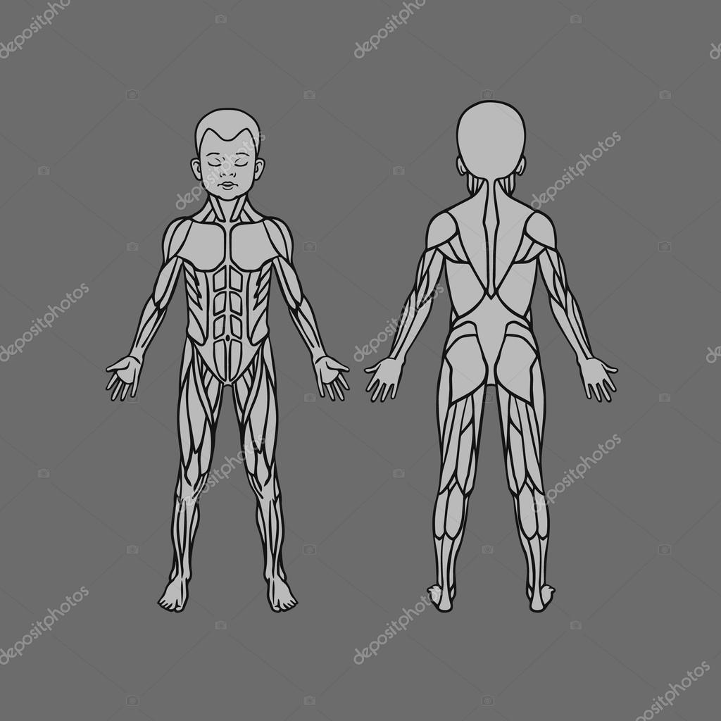 Anatomy Of Children Muscular System Exercise And Muscle Guide Child Muscle Vector Art Front