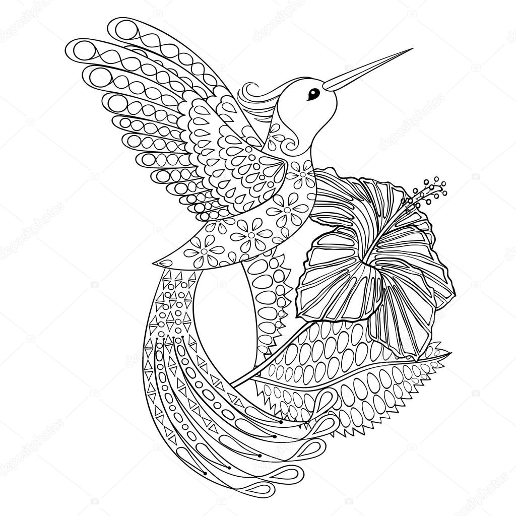 Adult Hummingbird Coloring Pages Printable Sketch Coloring
