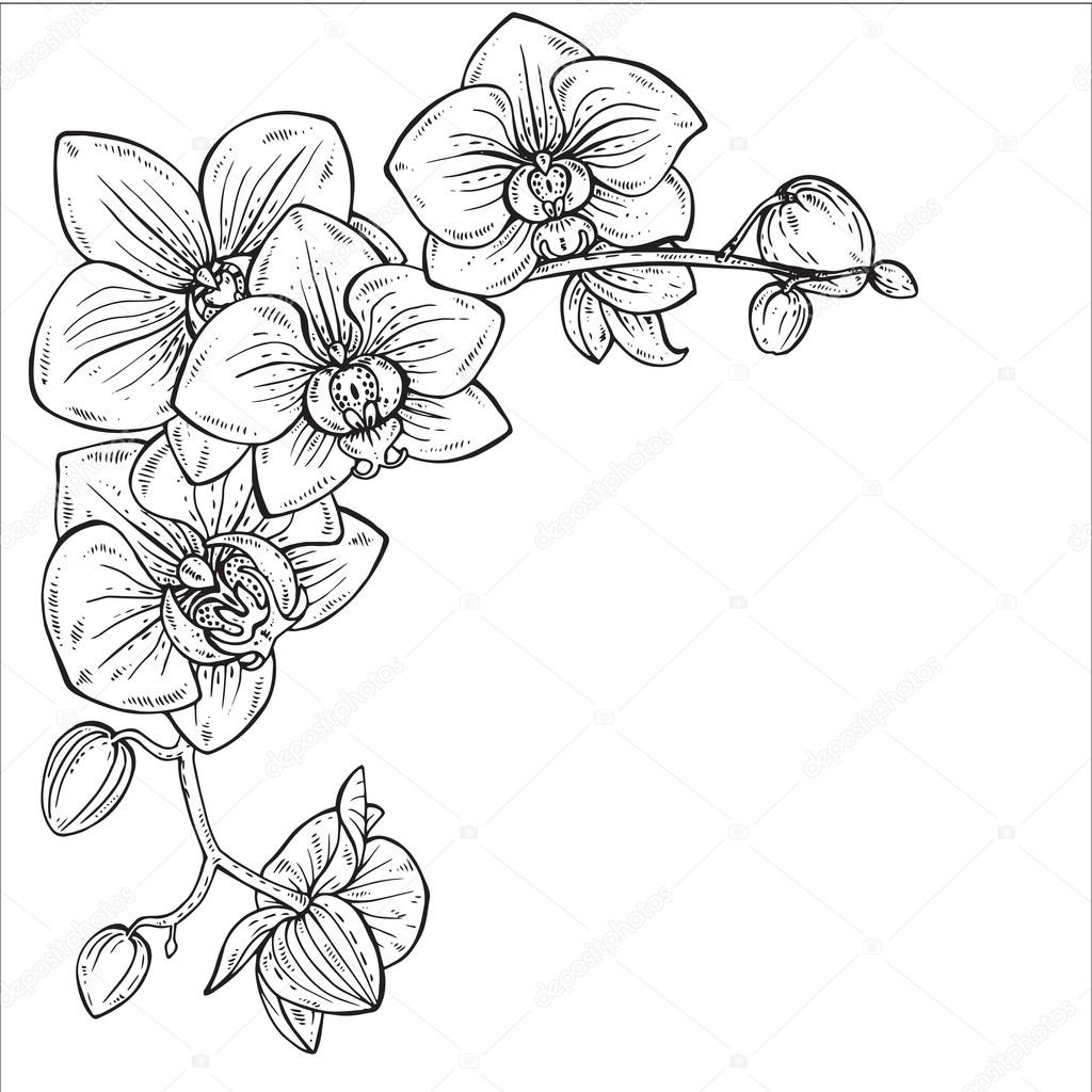 Beautiful Monochrome Vector Illustration With Orchid
