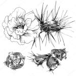 Decorative Cactus Flower Stock Photo Image By C Magnolija Three 96129434