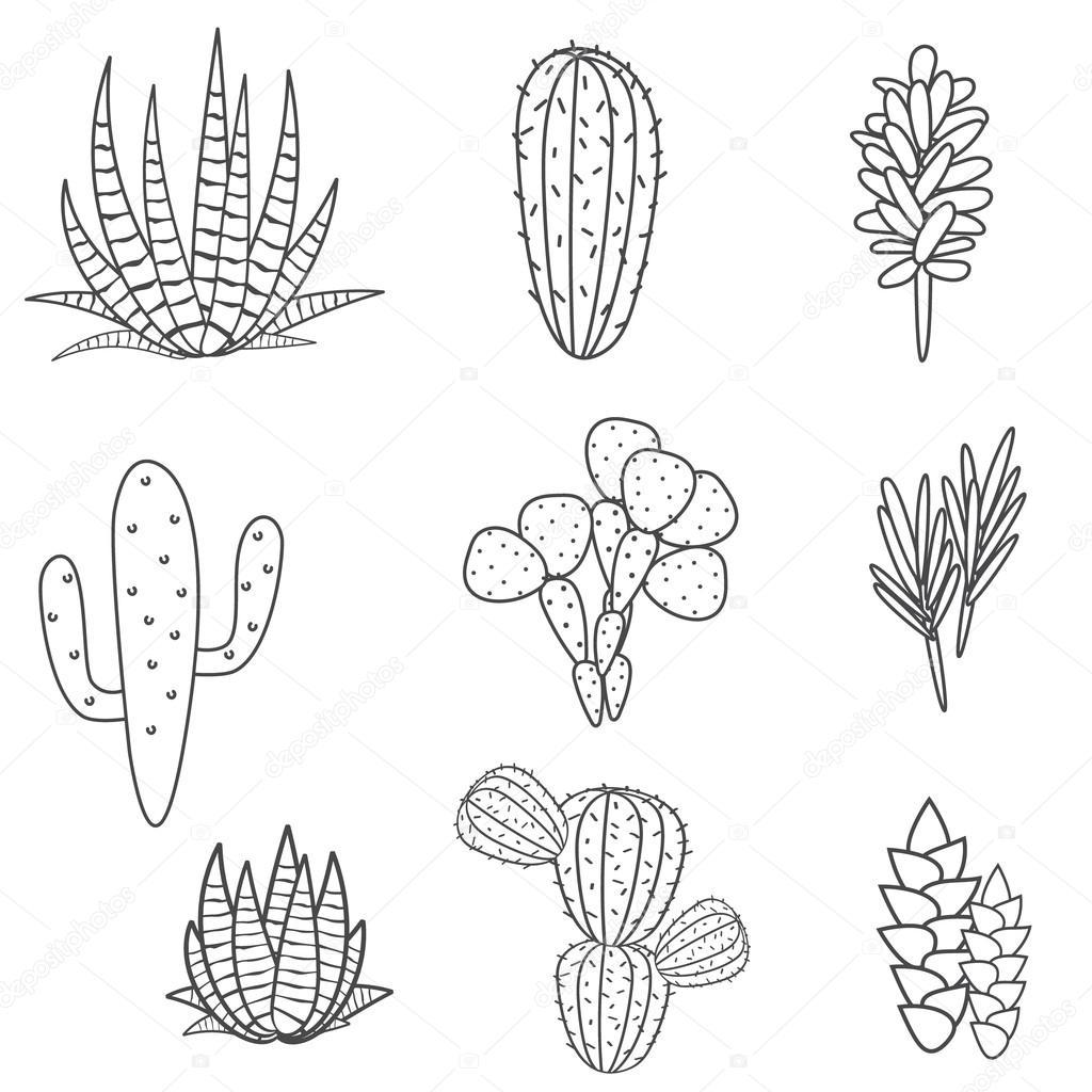 Succulents Plant Vector Set Botanical Black And White