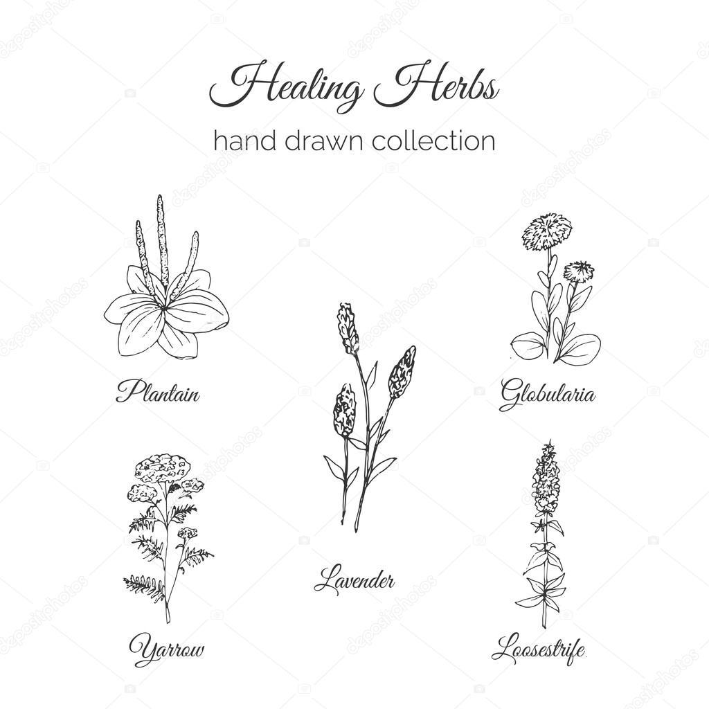 Pictures Holistic Medicine