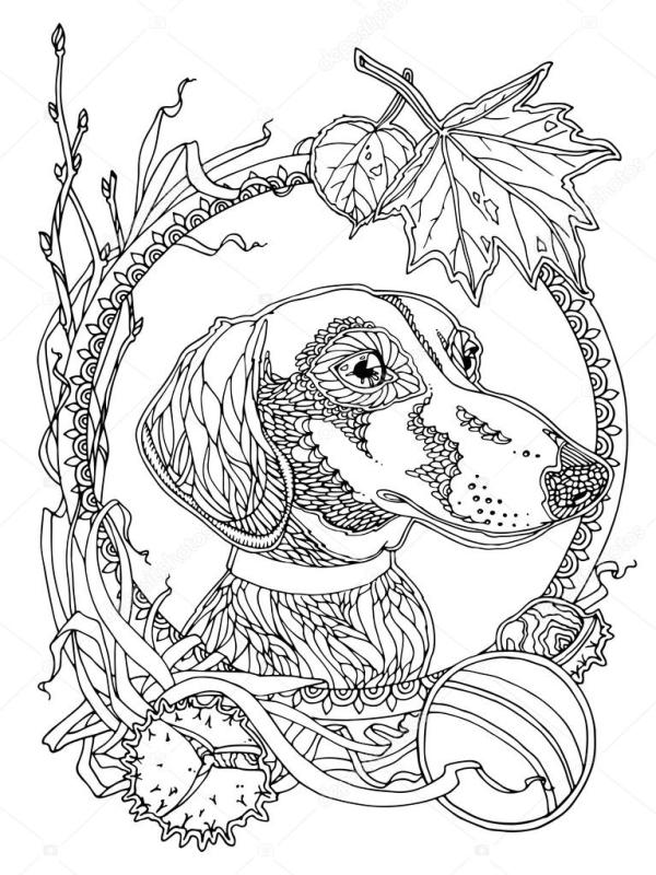 dachshund coloring pages # 13