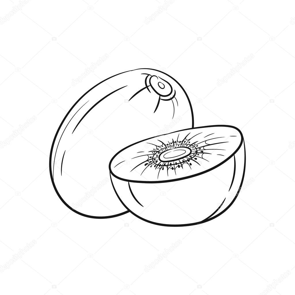 Schizzi Di Kiwi Disegnata A Mano