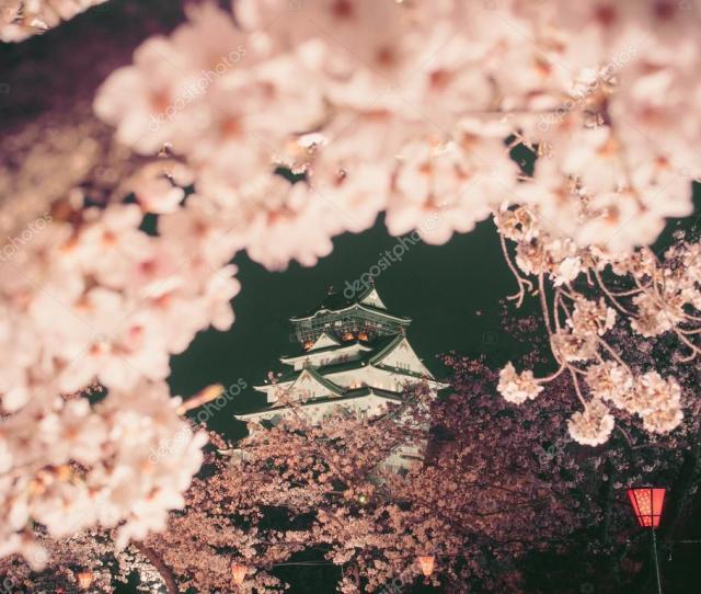 Osaka Castle Among Cherry Blossom Trees Sakura At Night Scene Stock Photo