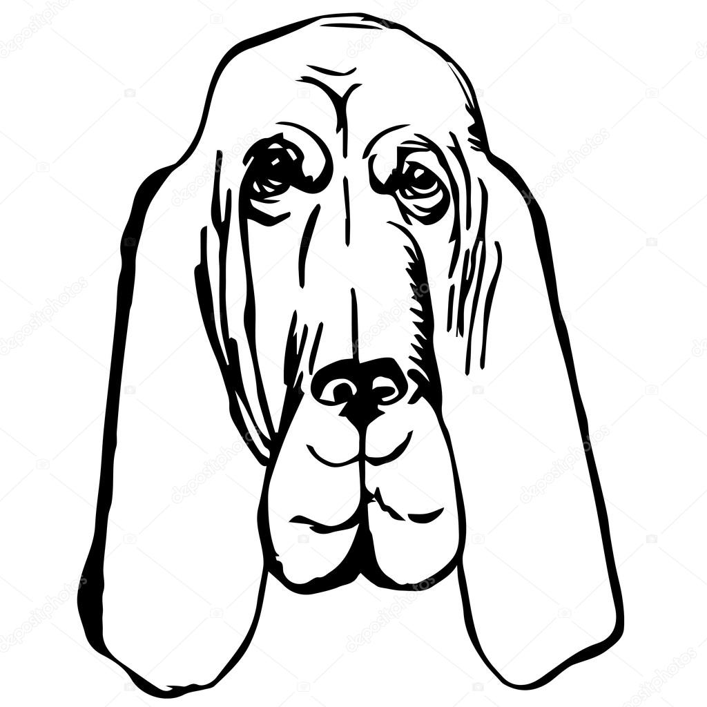 Graphic Vector Illustration Of Bloodhound Dog Isolated Vector Dog Portrait