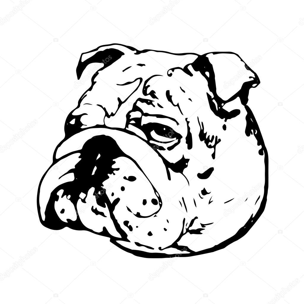 Graphic Vector Illustration Of English Bulldog Isolated