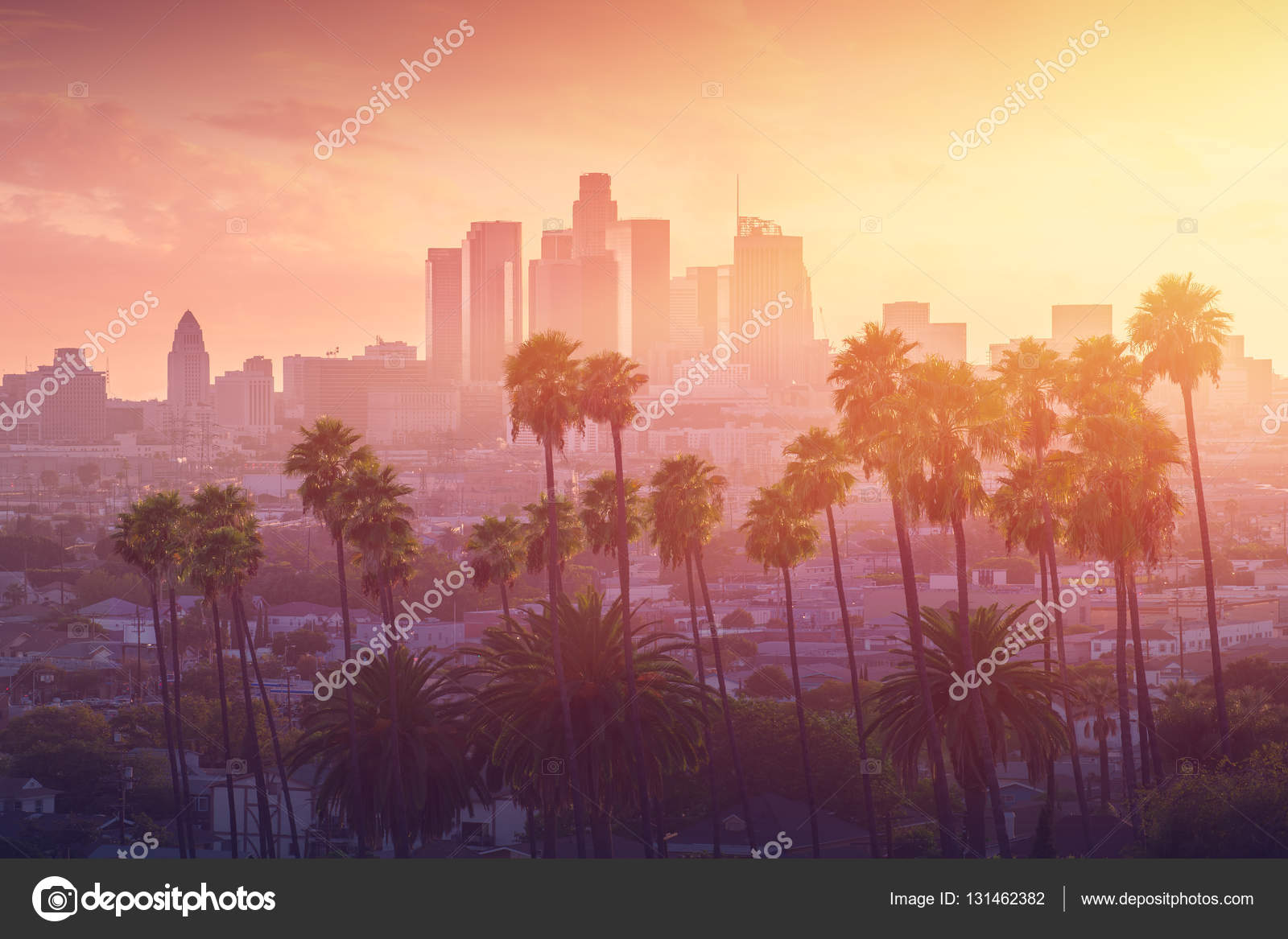 Hollywood Palm Tree Graphic