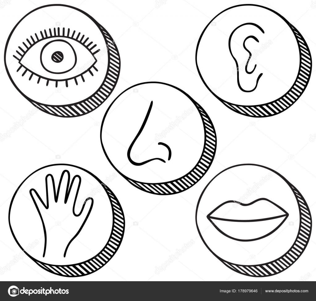 5 Senses Drawing