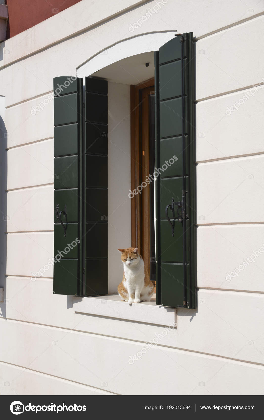 Orange And White Fur Cat Is Sitting In Front Of A Window