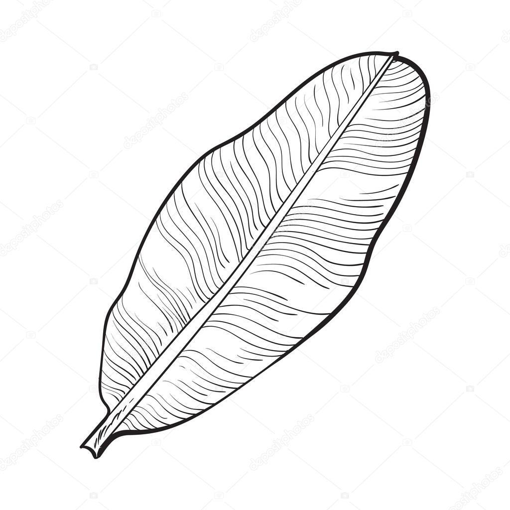 Cheio De Folhas Frescas De Palmeira Banana Desenho
