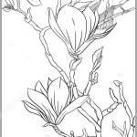 Magnolia Tree Branch Stock Vector C Elenabesedina 316518006