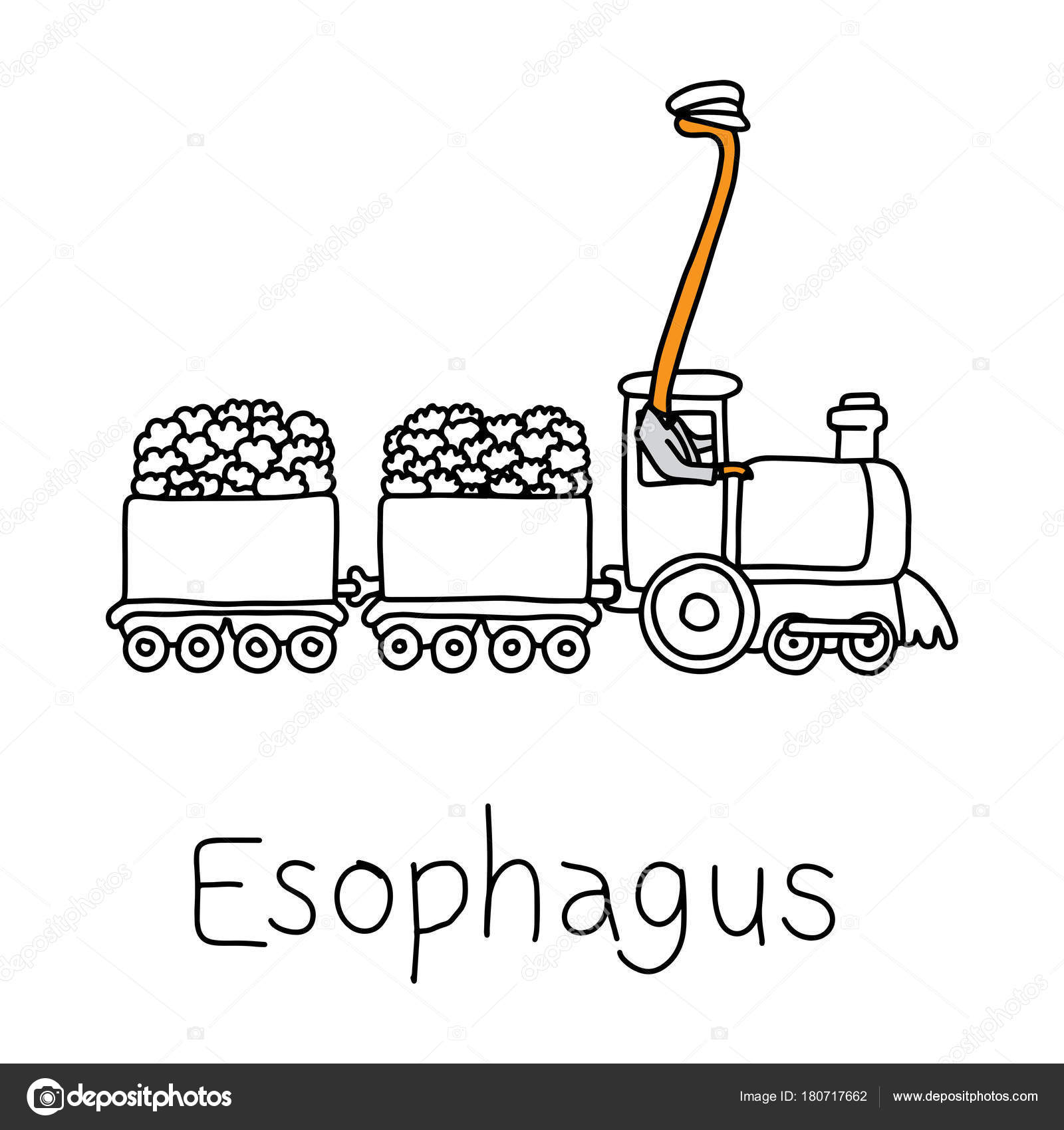 Cartoon Esophagus Pictures