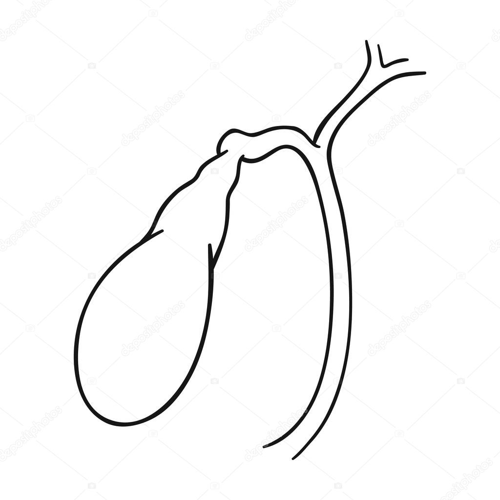 Human Gallbladder Icon In Outline Style Isolated On White