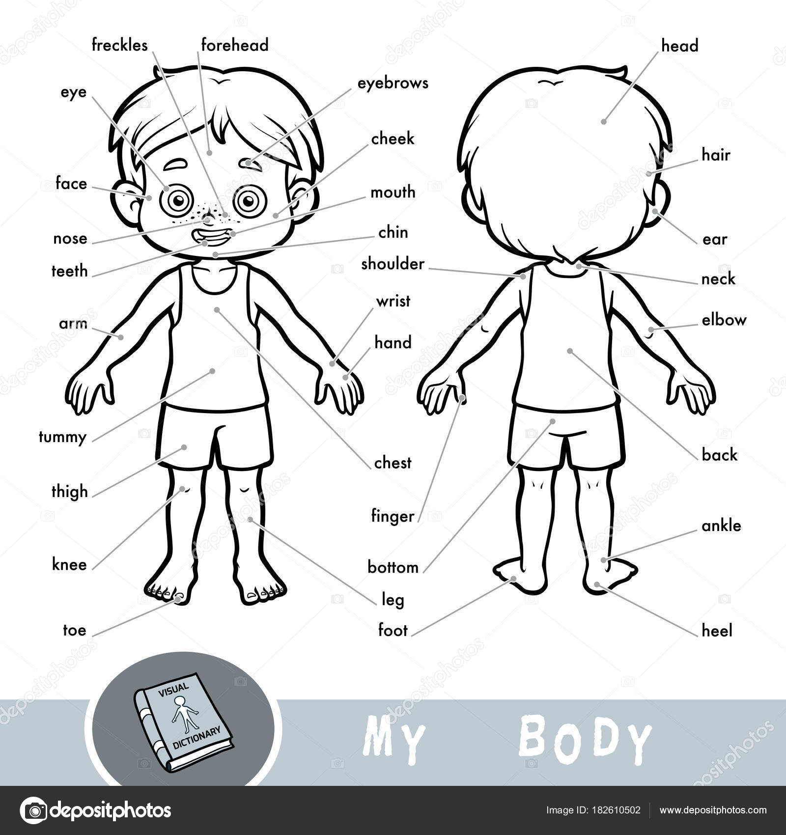 Worksheet Human Body Parts