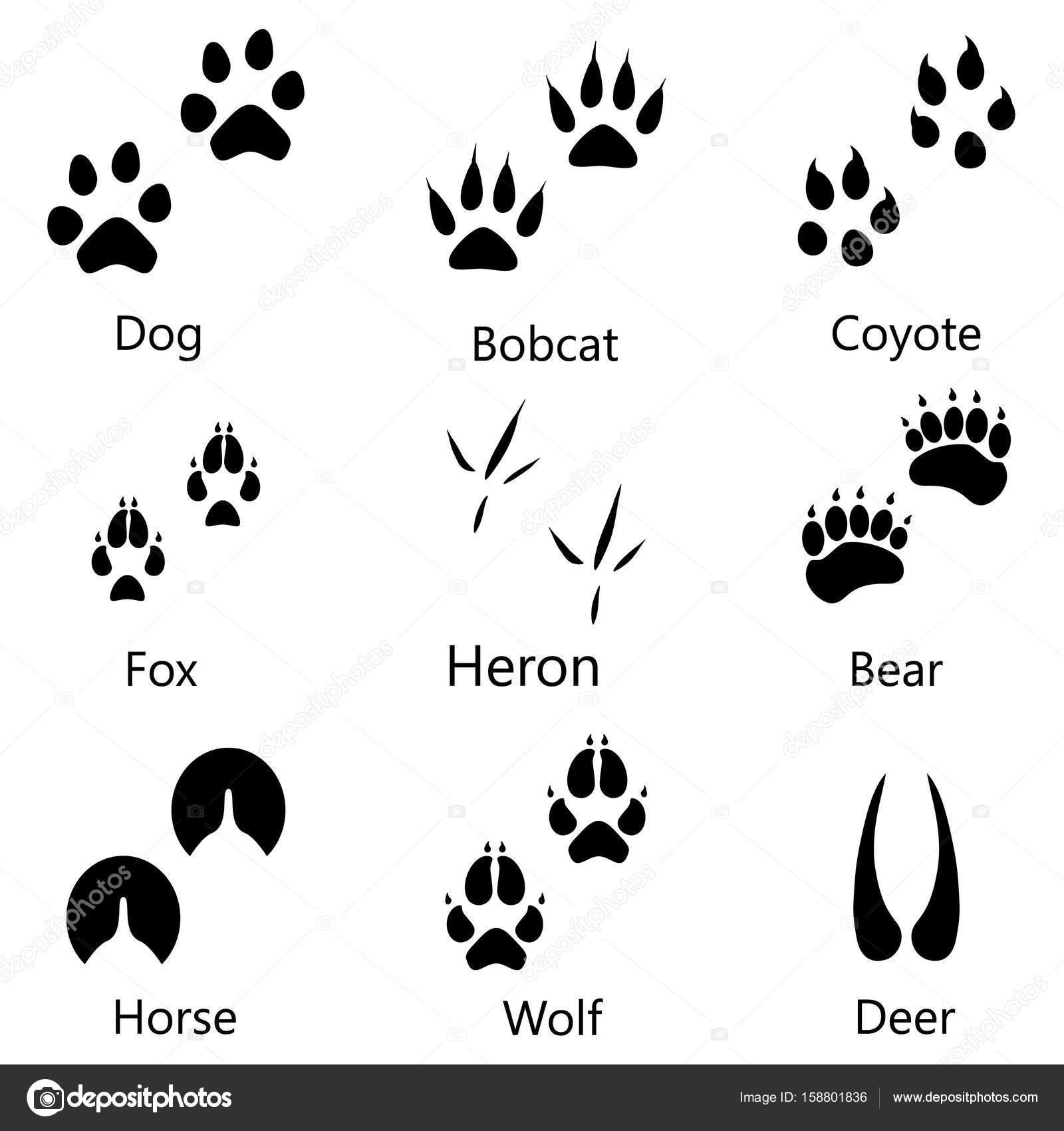 Animal Footprints Raster