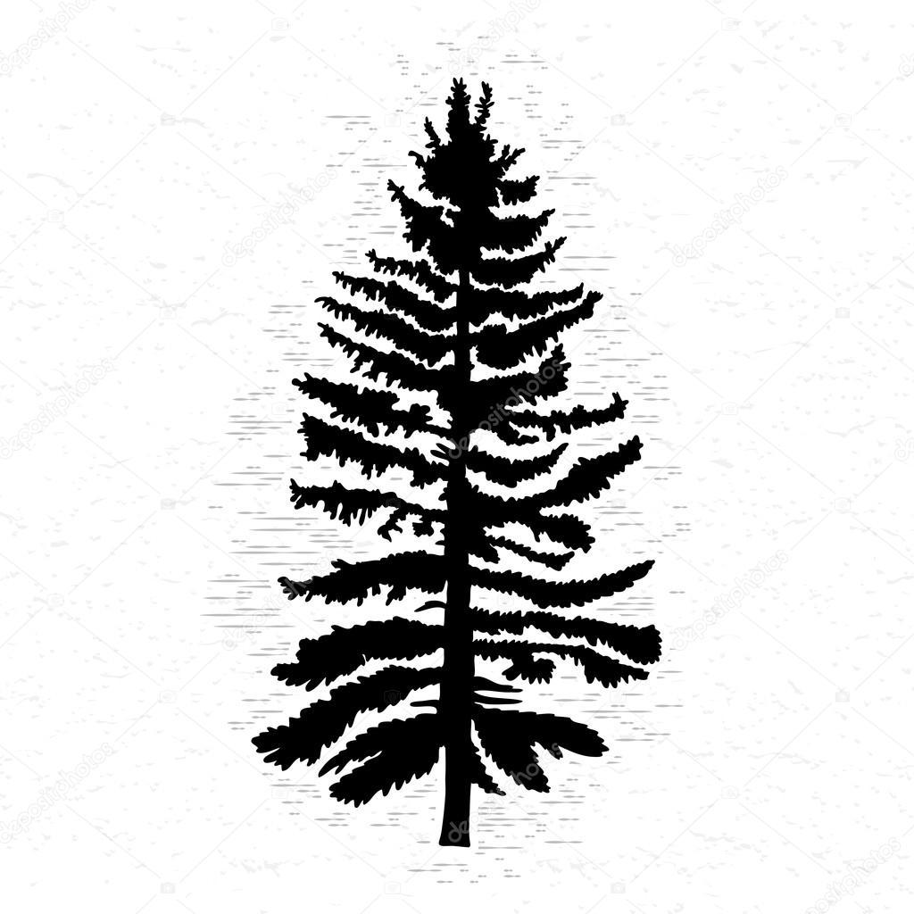 Raster Silhouet Van Canadese Naaldboom
