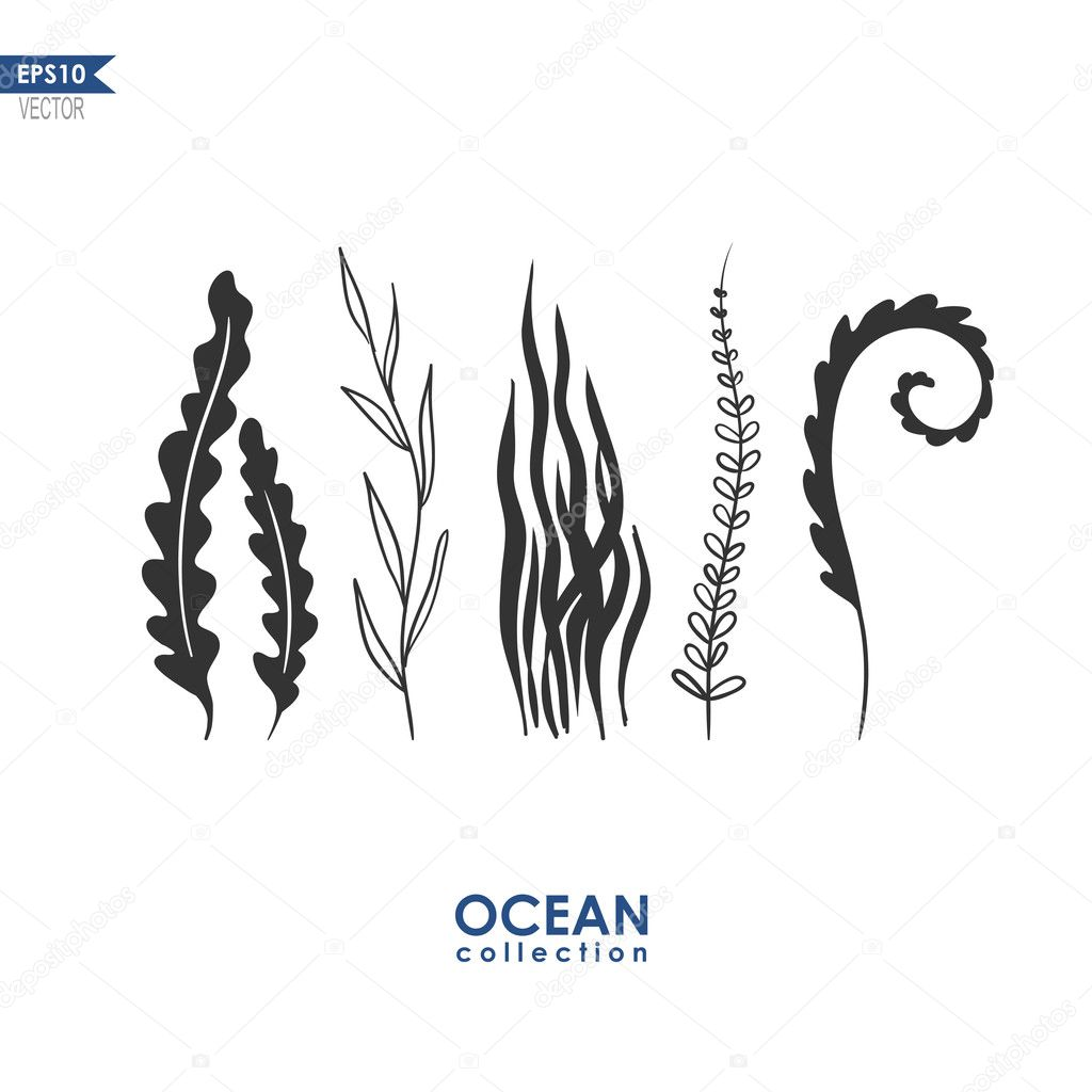 Sea Weed And Water Plants