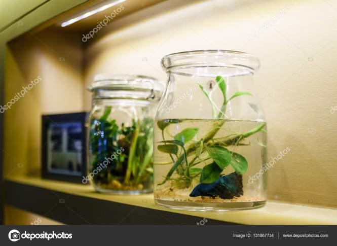 Betta Fish Bowl Decoration Ideas - The Best Fish 2018