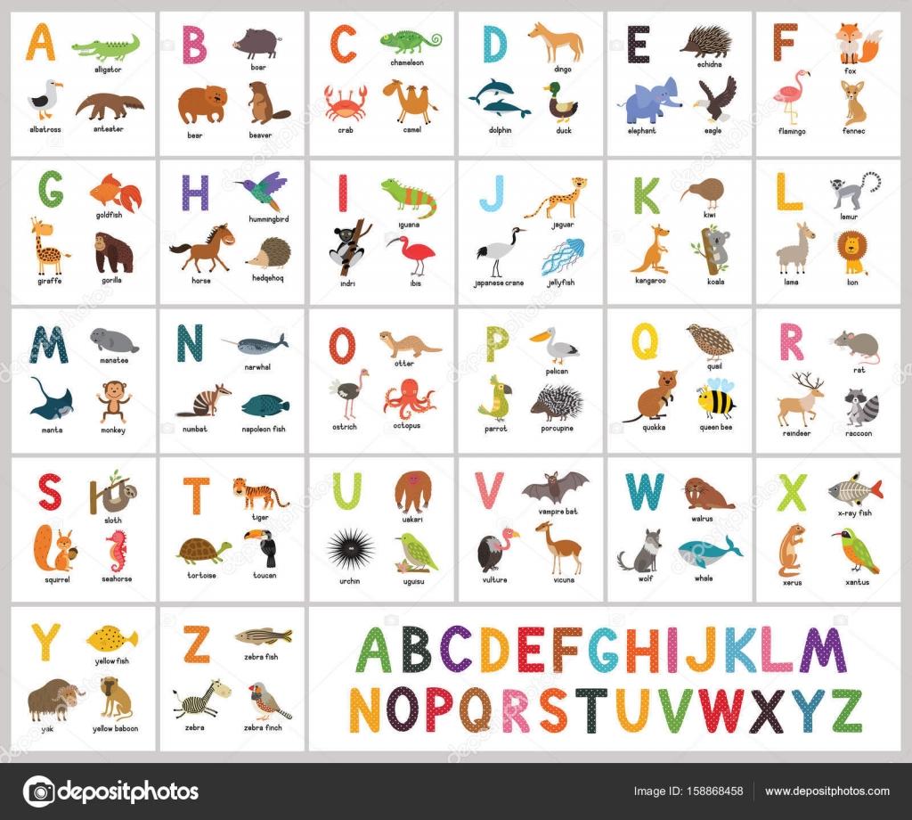 Nettes Vektorzoo Alphabet Abc Tiere