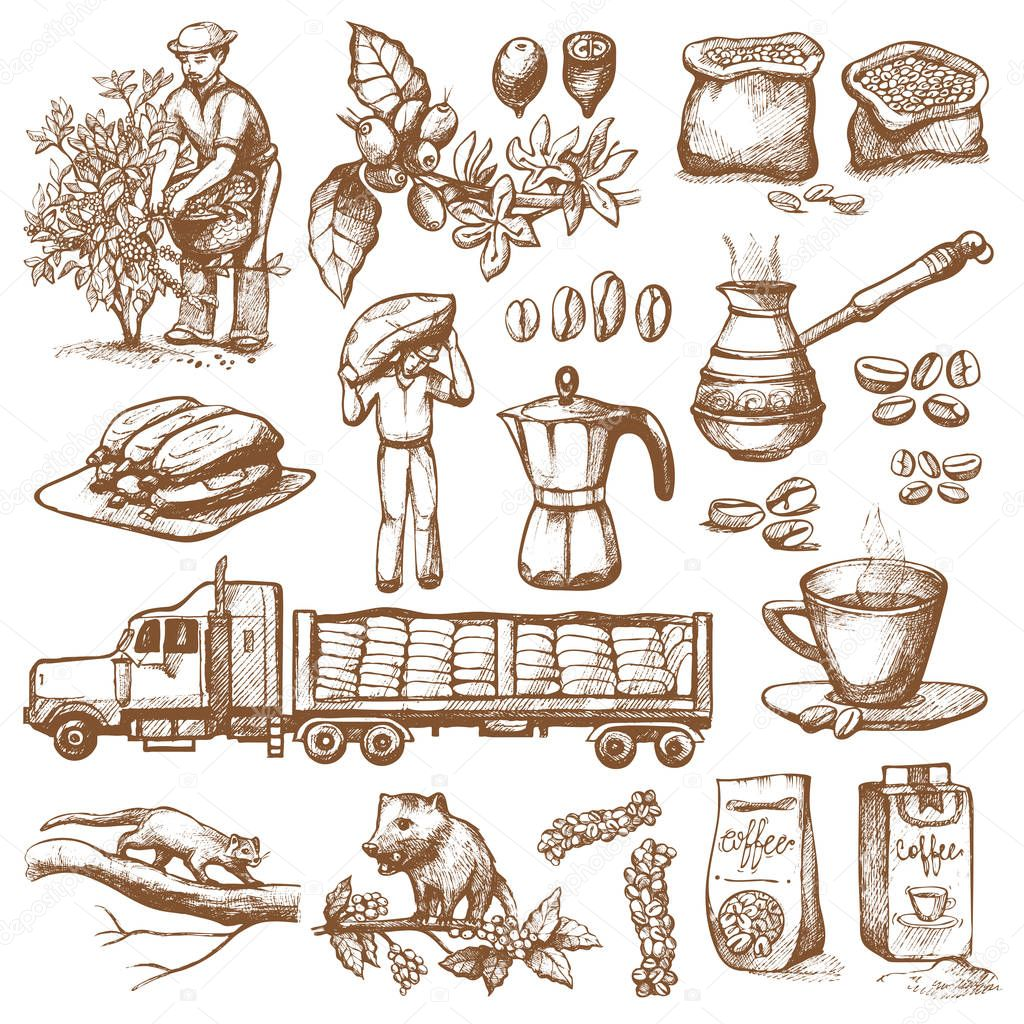 Coffee Production Plantation Vector Farmer Picking Beans On Tree And Vintage Drawing Drink Retro Cafe Collection Sketch Dessert Illustration Restaurant Espresso Hot Natural Morning Bean Premium Vector In Adobe Illustrator Ai