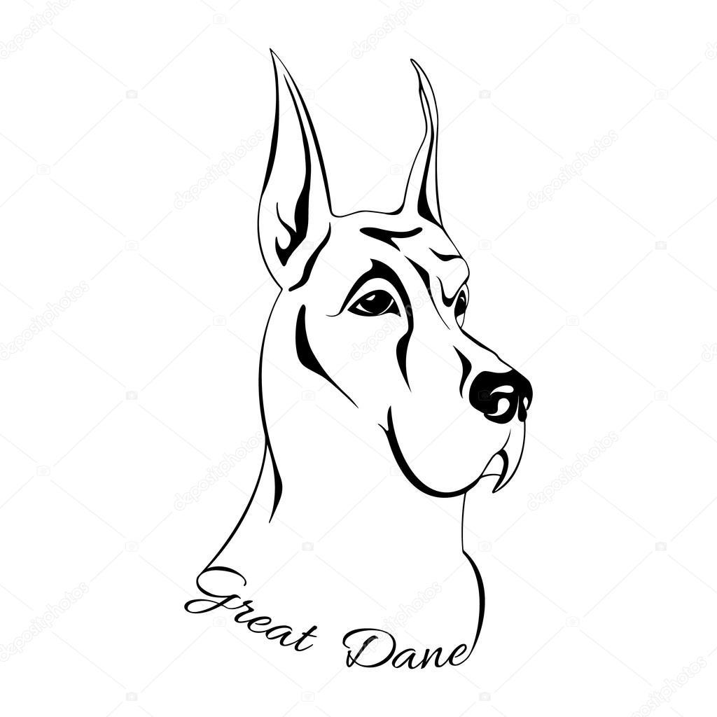 Dog Head Isolated Great Dane
