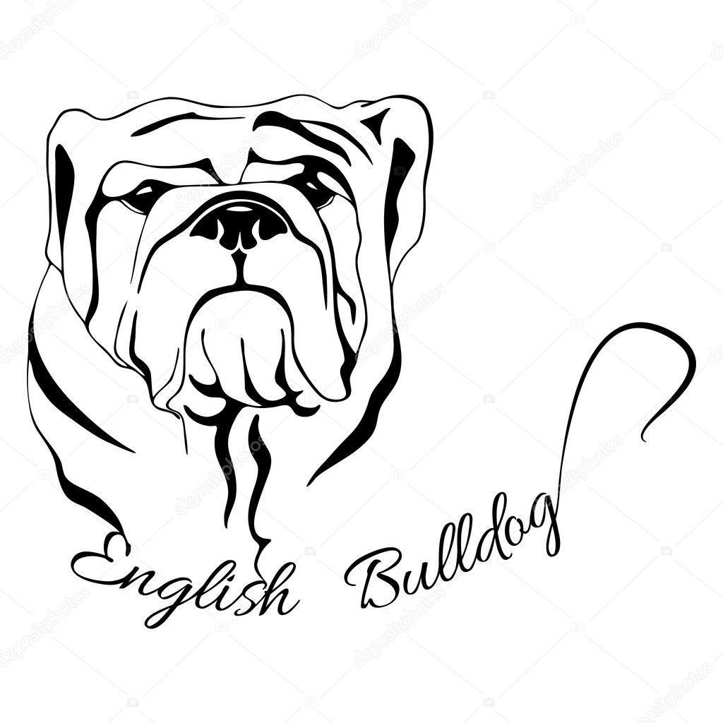 Aislado De Cabeza De Perro Bulldog Ingles