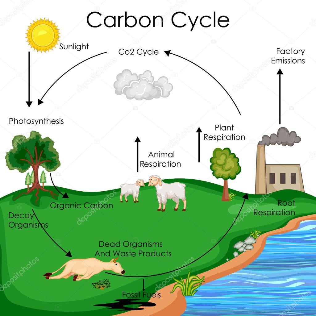 Imagenes Ciclo Del Carbono Dibujo