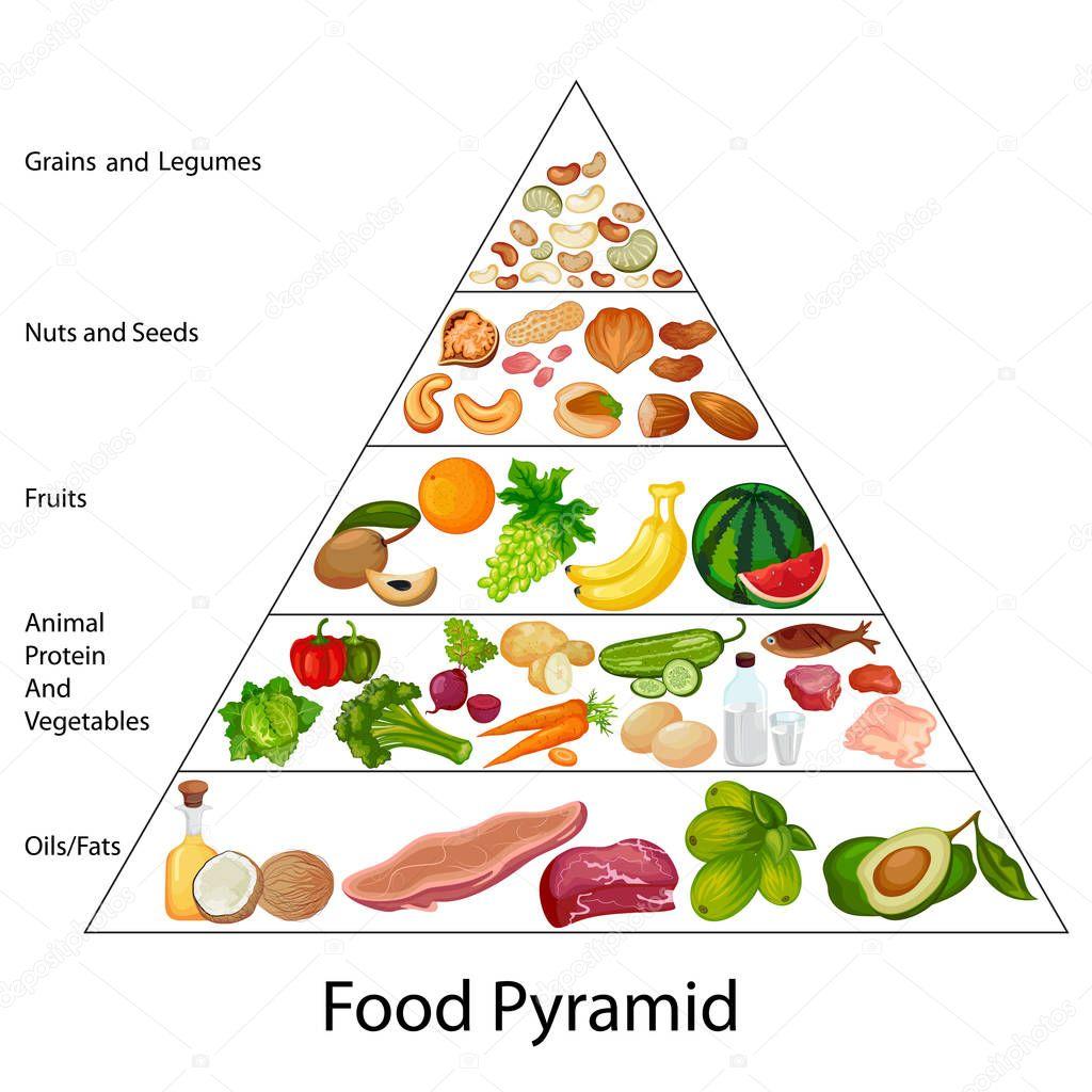 Bildung Diagramm Der Ernahrungspyramide Diagramm