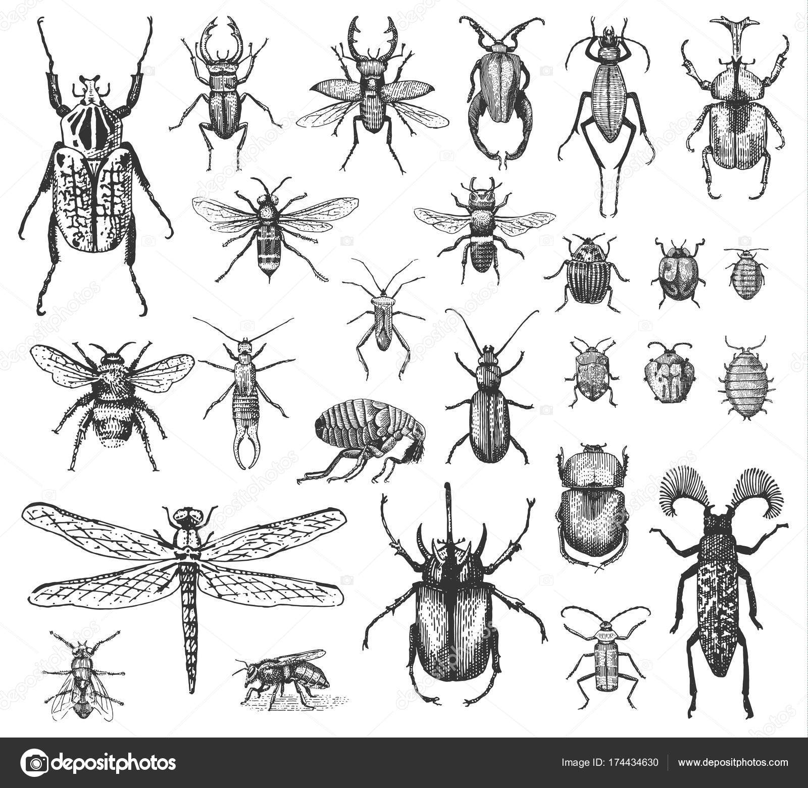Big Set Of Insects Bugs Beetles And Bees Many Species In