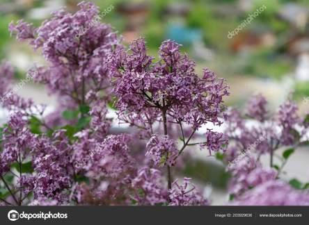 「韓国の花」の画像検索結果