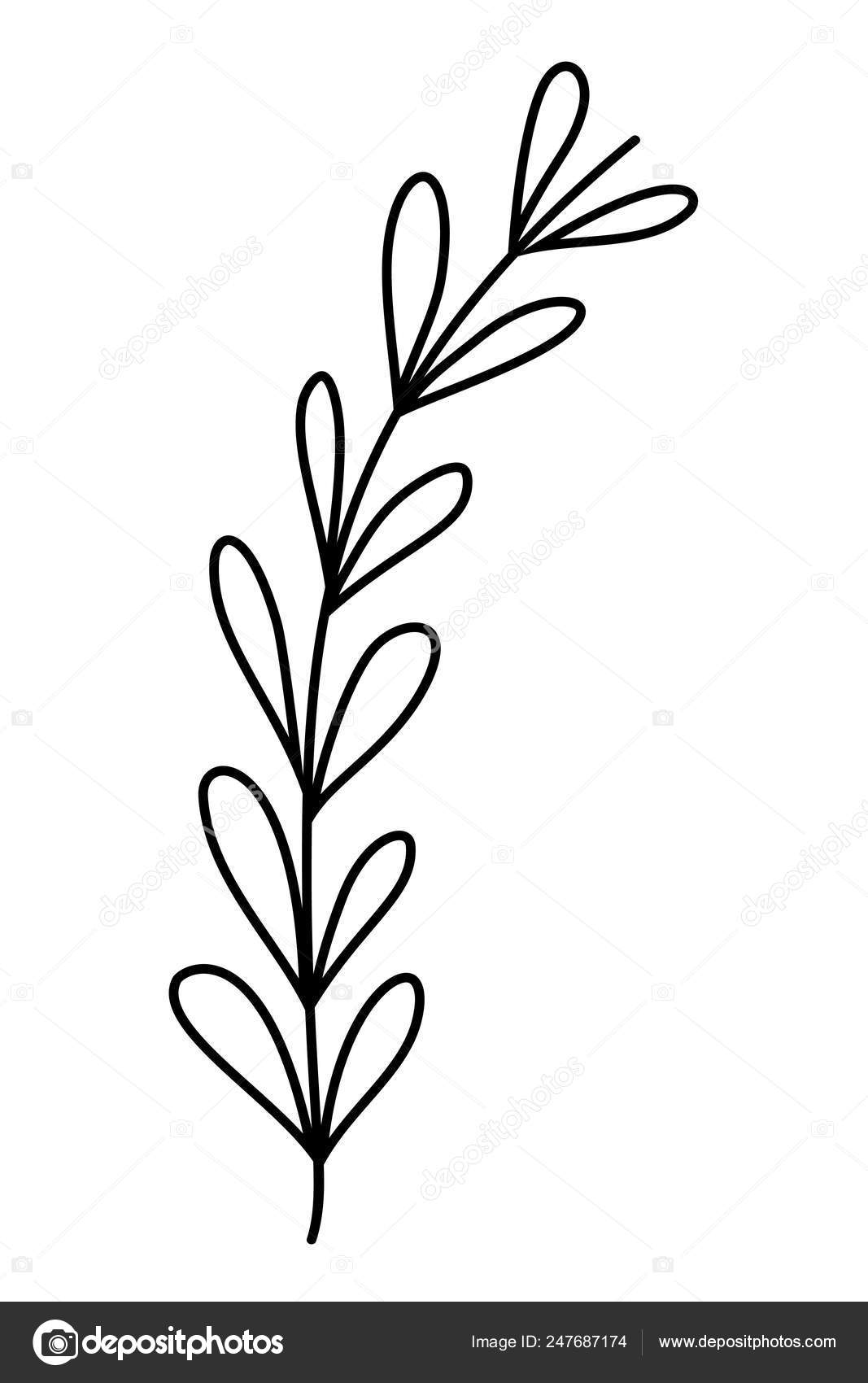 Outline Tropical Branch Plant Leaves Style