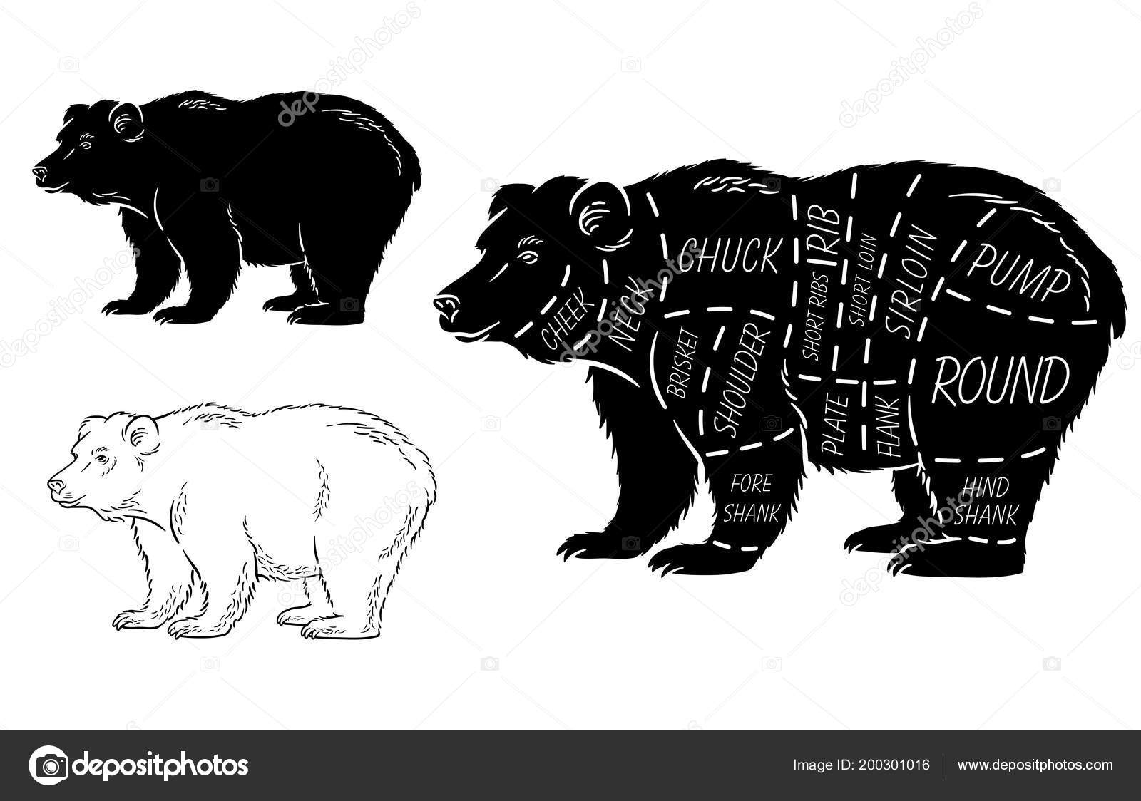 Labeled Grizzly Bear Diagram