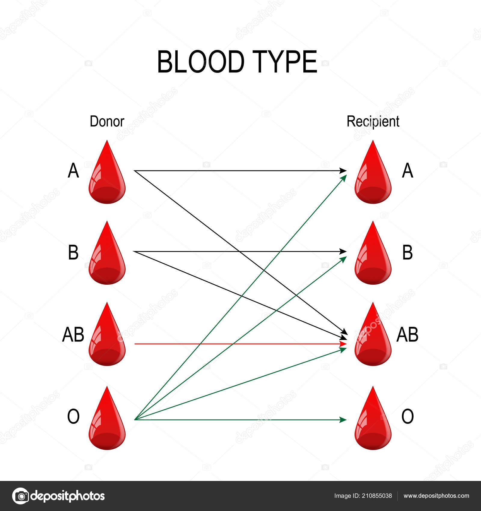 Empfanger Und Spender Arten Von Blut Gibt Eine Spezifische