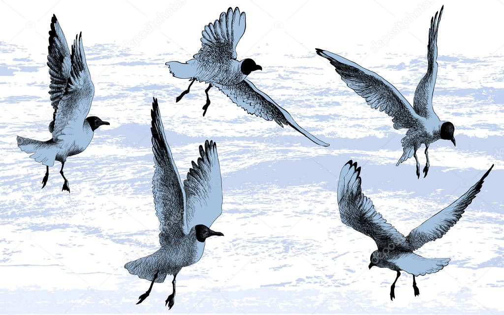 Seagulls Birds Flying Drawing Vector Illustration Premium Vector In Adobe Illustrator Ai Ai Format Encapsulated Postscript Eps Eps Format
