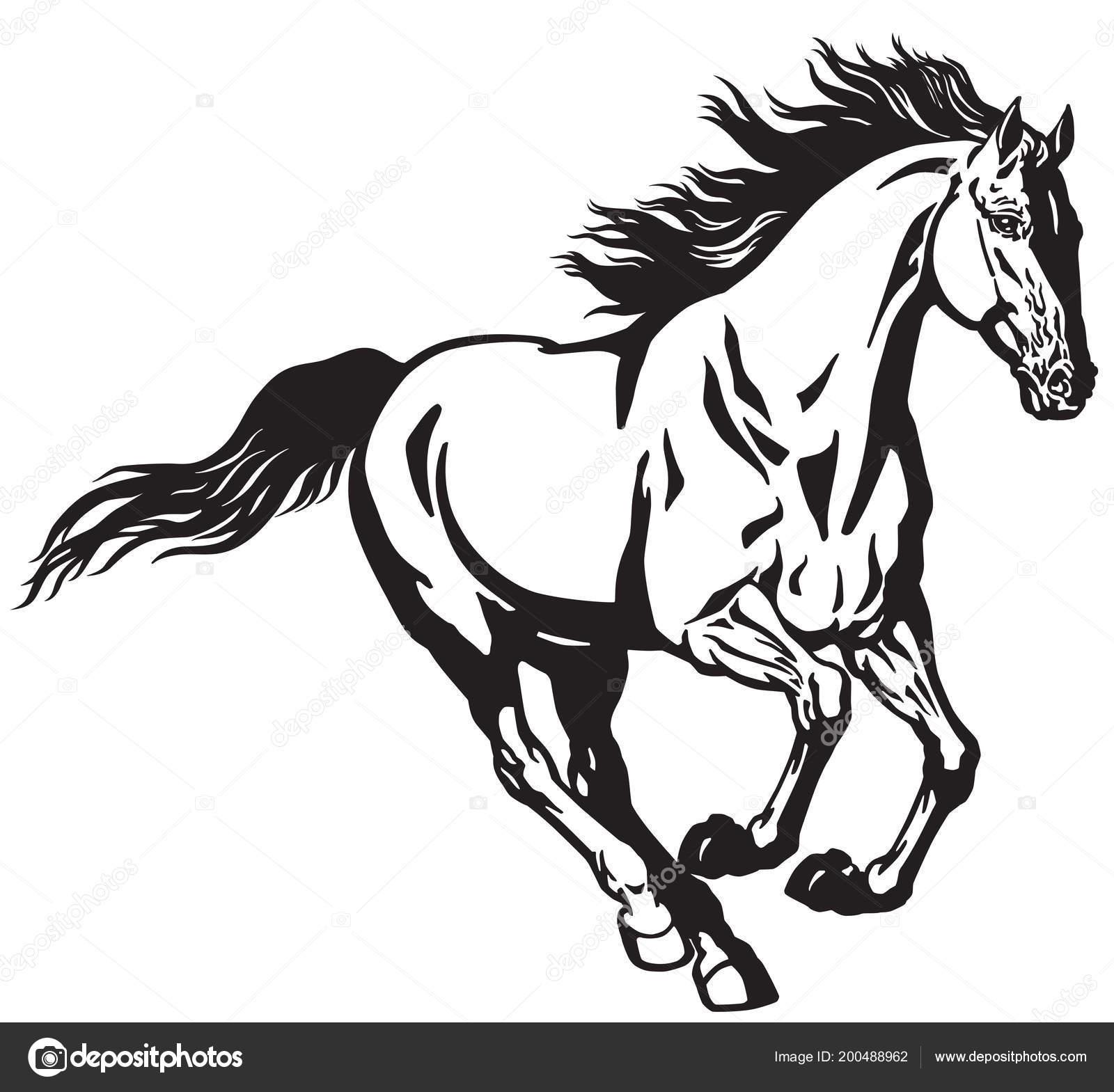 Hengst Pferd Laufen Galopp Wildes Pony Mustang Schwarz