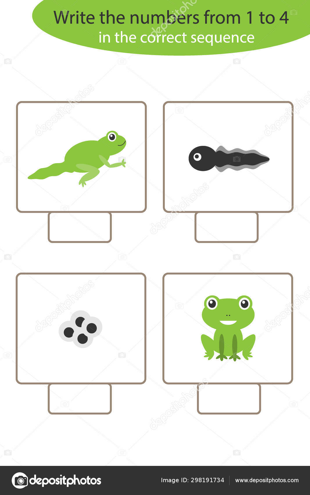 Visual Game With Frog Life Cycle For Kids Educational