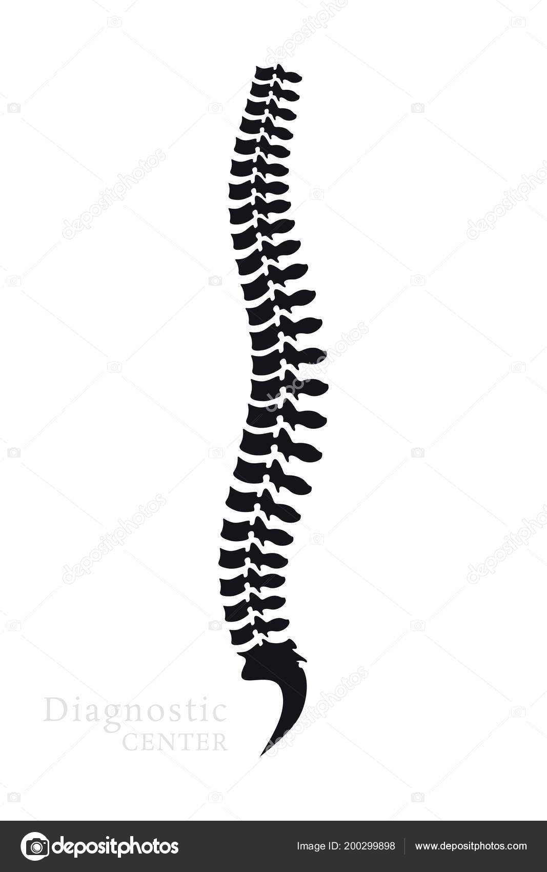 Columna Vertebral Todas Las Vertebras Cervical Toracica