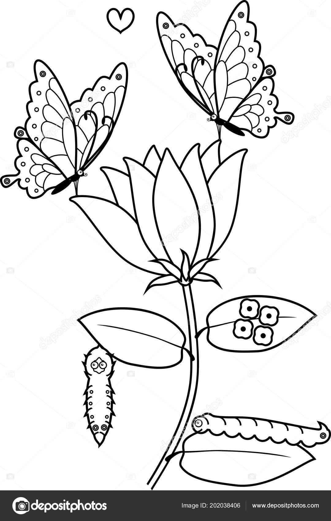 Pagina Para Colorear Ciclo Vida Mariposa Flor