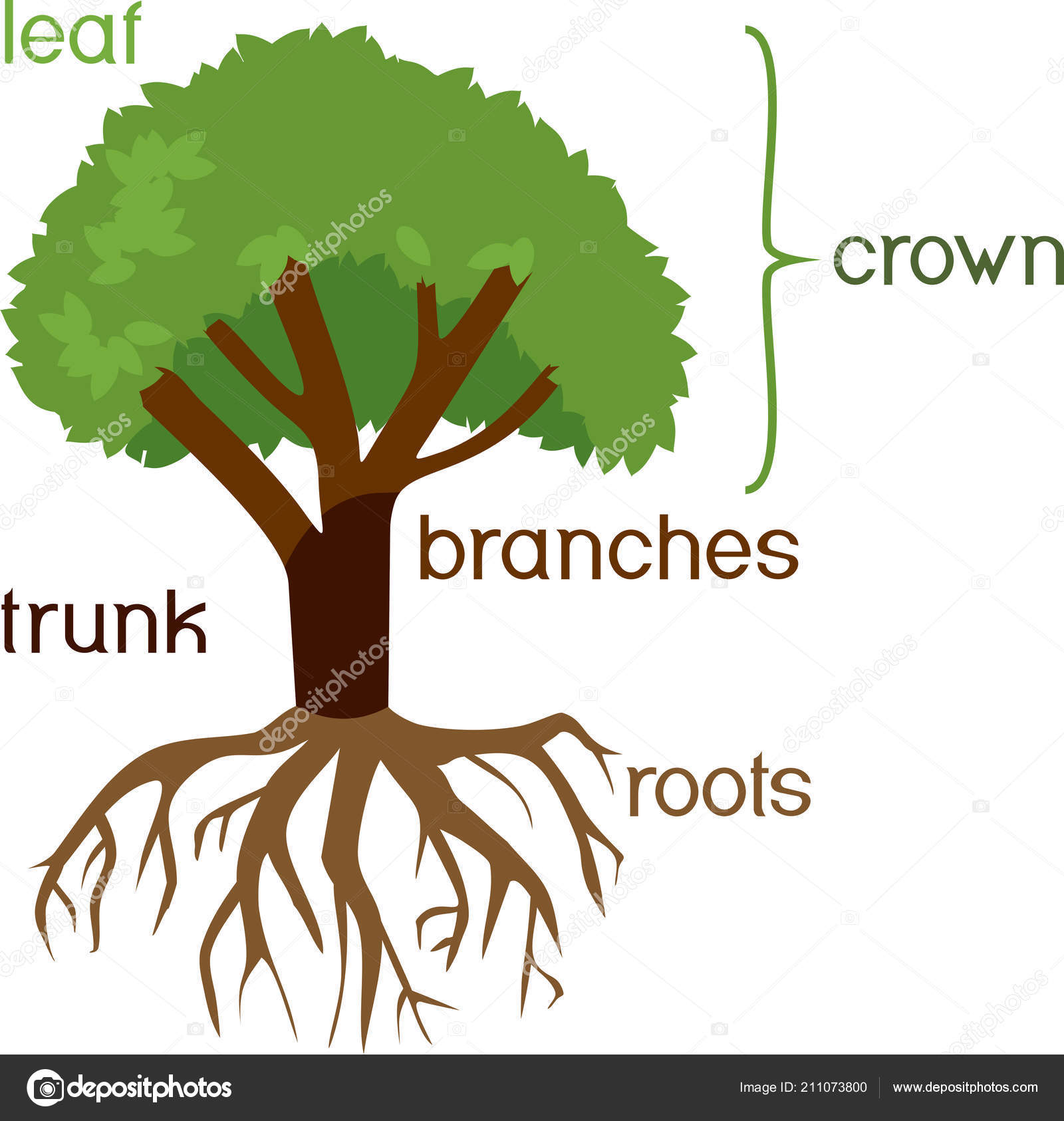 Parts Plant Morphology Tree Green Crown Root System Titles