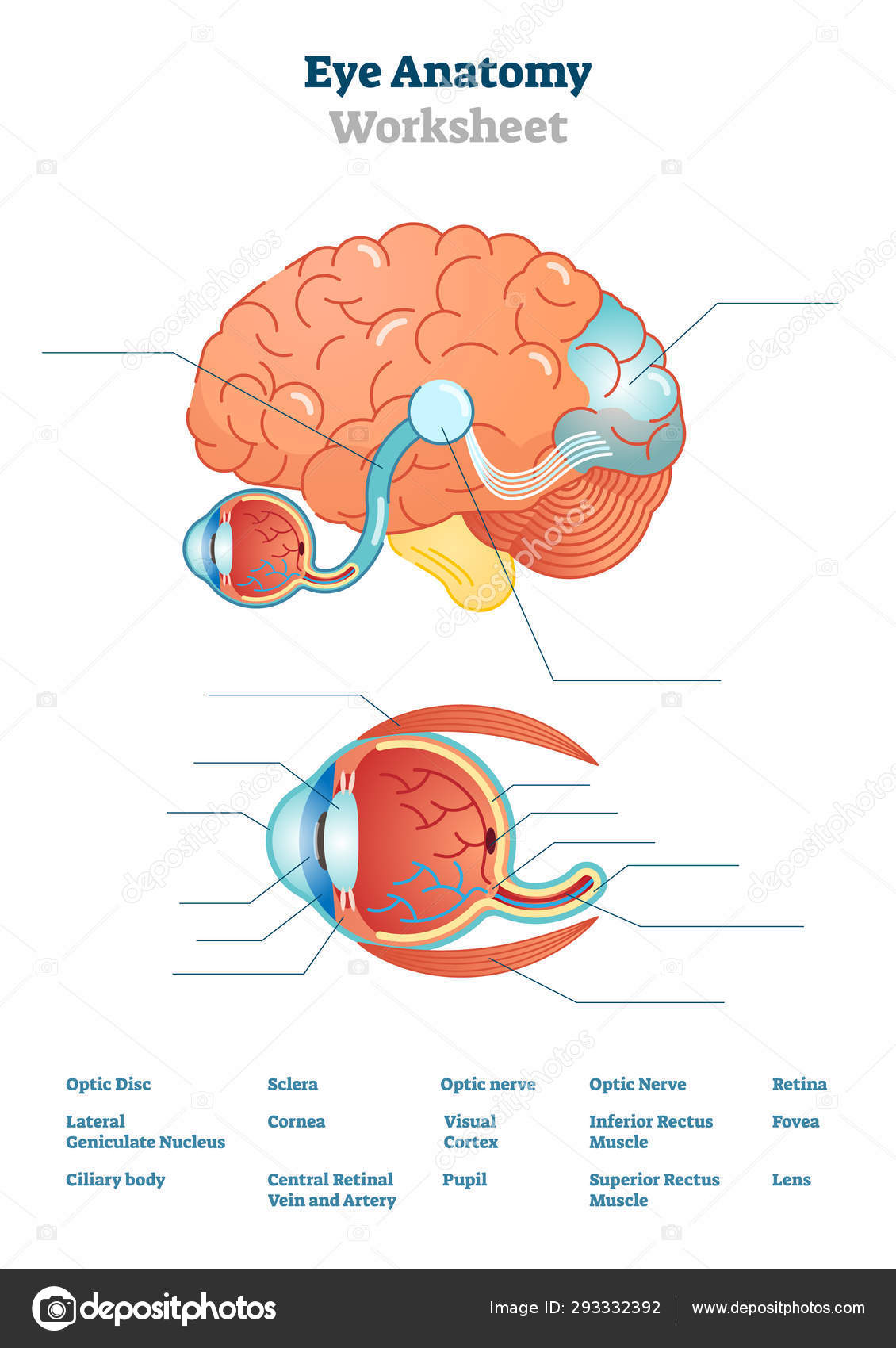 Parts Of The Brain Worksheet For Kids