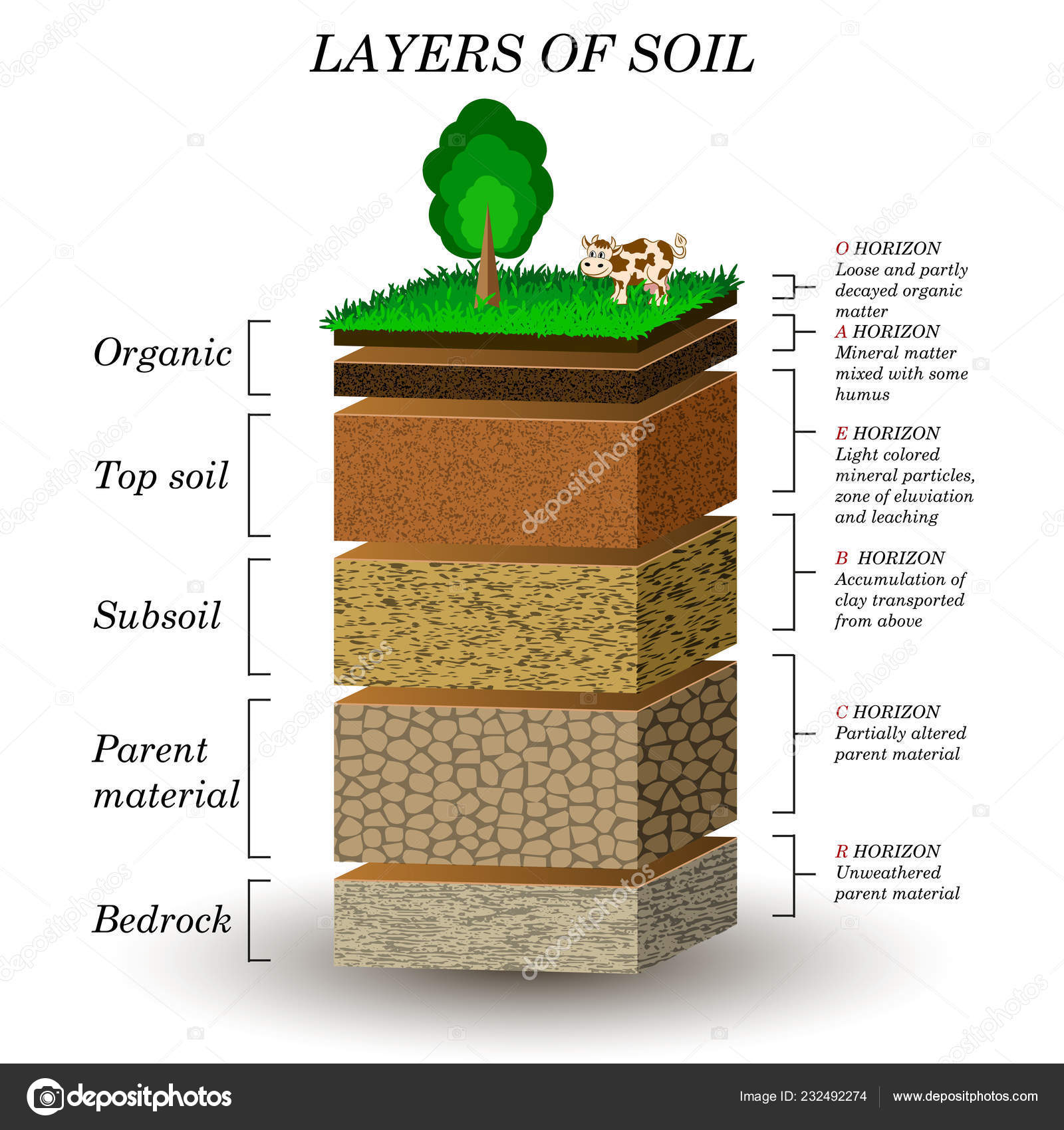 Layers Soil Education Diagram Mineral Particles Sand Humus