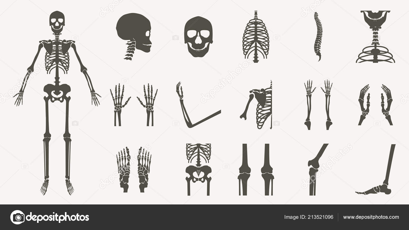 Human Bones Orthopedic Skeleton Silhouette Collection Set