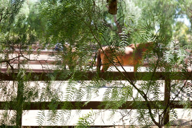 A horse through the trees