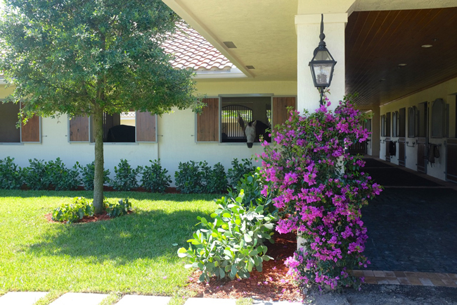 A Lush Florida Horse Property